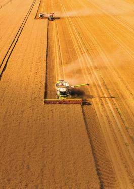 two combine harvesters in a field
